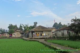 Perkampungan yang tumbuh di tengah persawahan.